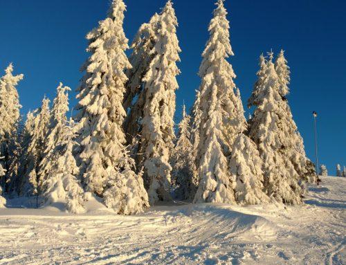 Oferta de Weekend 2020 la schi in Vârtop!